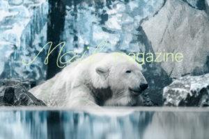 maga_228